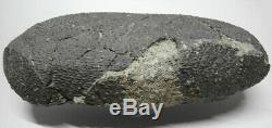 Authentic oval-shaped Theropod dinosaur egg fossil, dark eggshell MUSEUM QUALITY