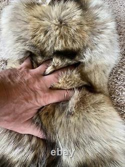 XL SELECT SUPER FLUFFY Coyote Pelt DARK Fur Tanned Top Quality Log Cabin Decor