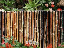 Barrière En Bambou - 1 Dia - 8 Sections De Qualité Commerciale - Choix De 3 Couleurs - 4 Hauteurs