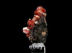 Bold Cerise Rouge Super Qualité Cluster Cristal Vanadinite Sur La Matrice Sombre #10