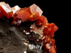 Bold Cherry Red Super Quality Vanadinite Crystal Cluster Sur Dark Matrix #11