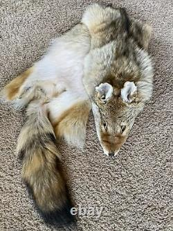 XL Select Super Fluffy Coyote Pelt Dark Fur Tanned Top Quality Log Cabin Décor
