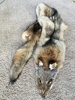 XXXL Coyote Pelt Dark Fur Tannés Qualité Log Cabin Decor Wild Country Fourrures