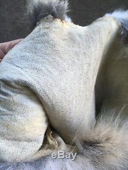 XXXL Peau De Coyote Foncé Tanné Top Qualité Sauvage Pays Fourrures Journal Cabane En Rondins